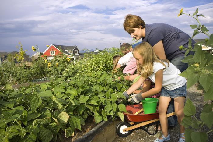 Новый закон о садоводческих товариществах 2017 года что нового