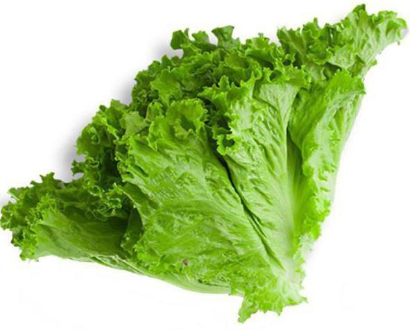 польза и вред от употребления листового салата
