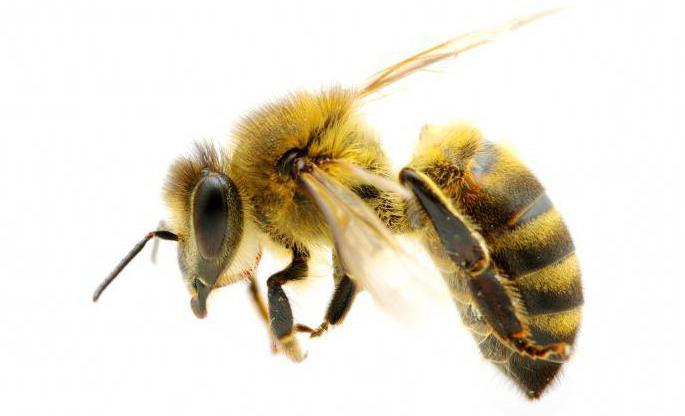 насекомые с полным превращением таблица
