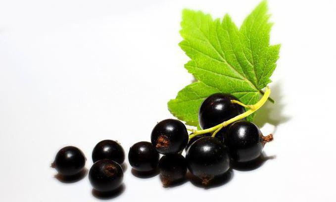 как ферментировать листья черной смородины