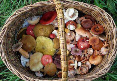 как в домашних условиях солить грибы