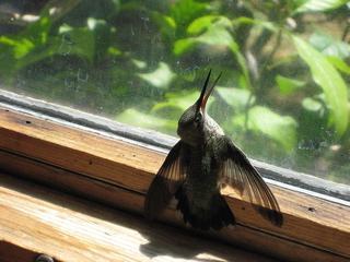 сонник выпасть из окна: