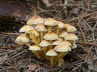 Ложные белые грибы фото 7.
