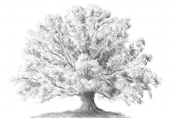 как нарисовать дерево дуб карандашом