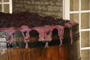 вино из винограда приготовление