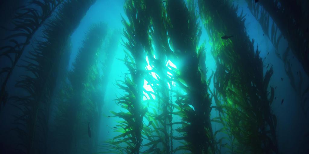 водоросли под водой