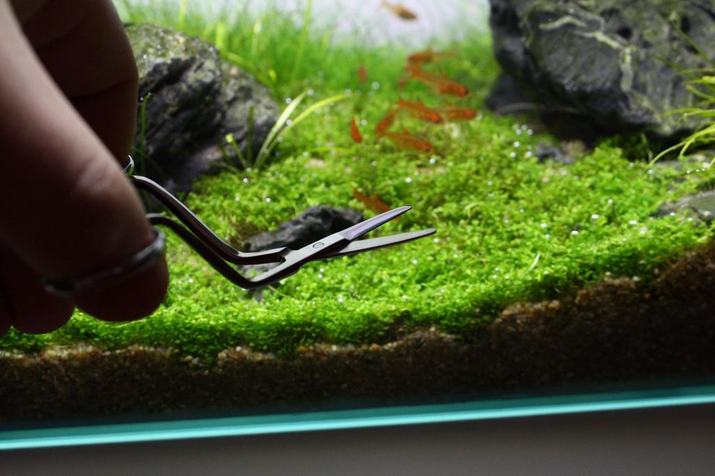 образуют барельефы как сажать водоросли в аквариум с фото пряные