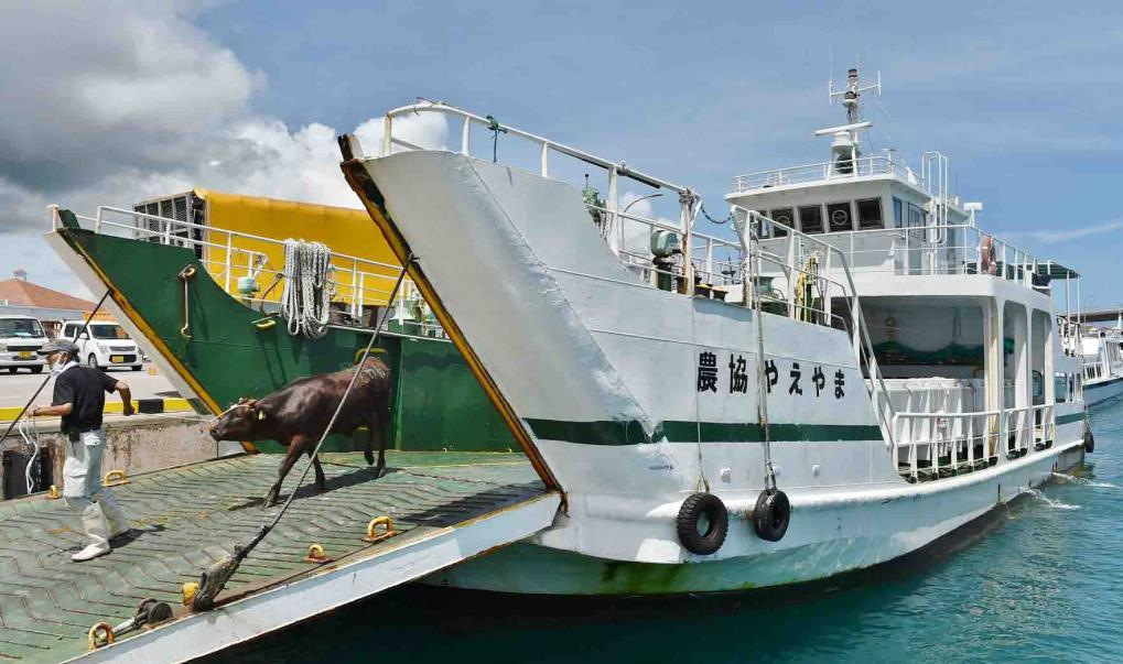Livestock transport on a ship