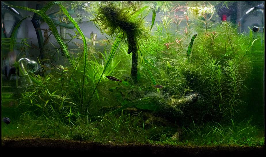 светланы экосистема аквариума картинки малышков