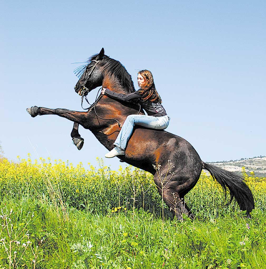 Лошадь на свечке