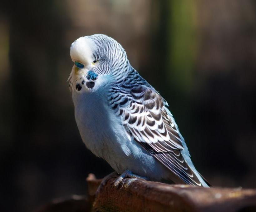 Птичка дремлет