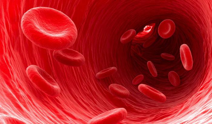 Папиллома мочевого пузыря у мужчин и женщин: симптомы и лечение