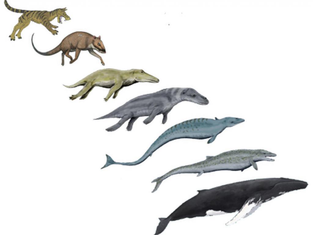 Эволюция китов картинка