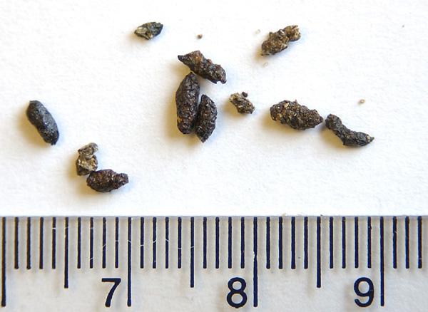 Как выглядят какашки мышей - Дневник садовода