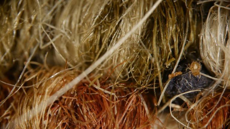 Пылевой клещ в волокнах ковра