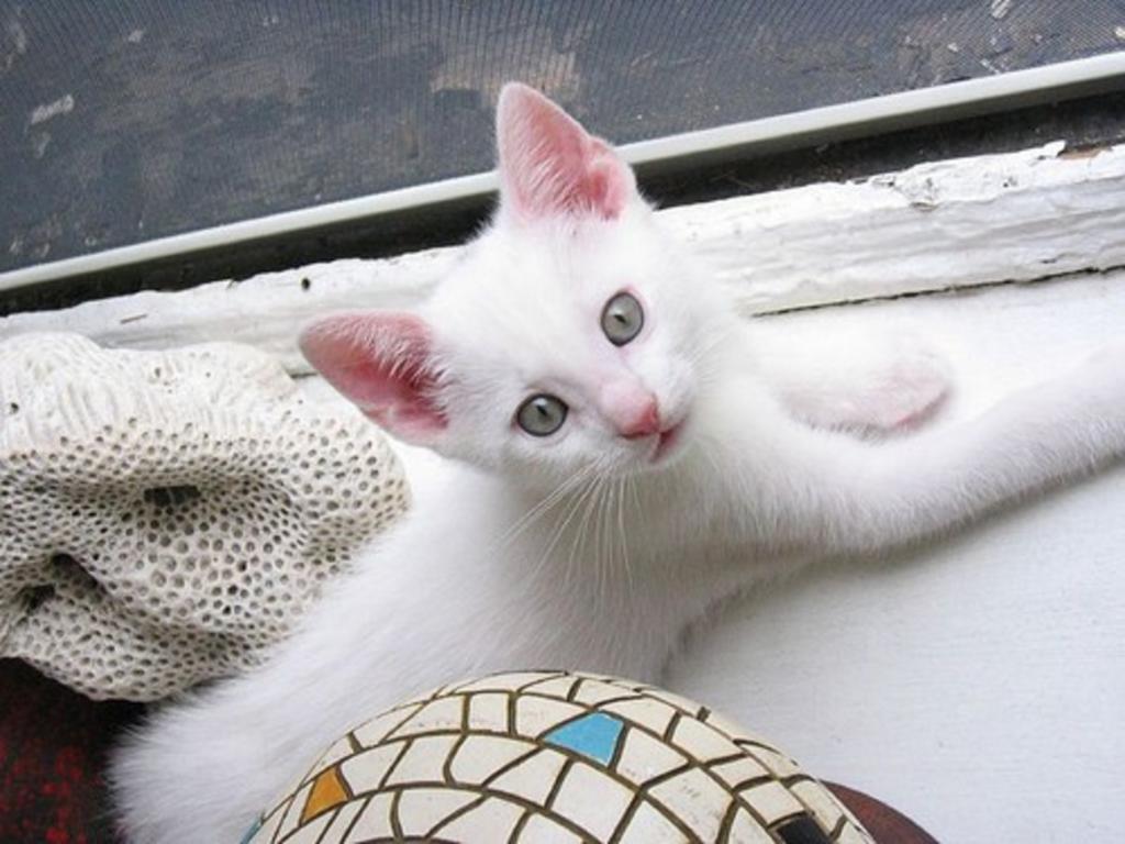 наполнитель для кошачьего туалета для котят