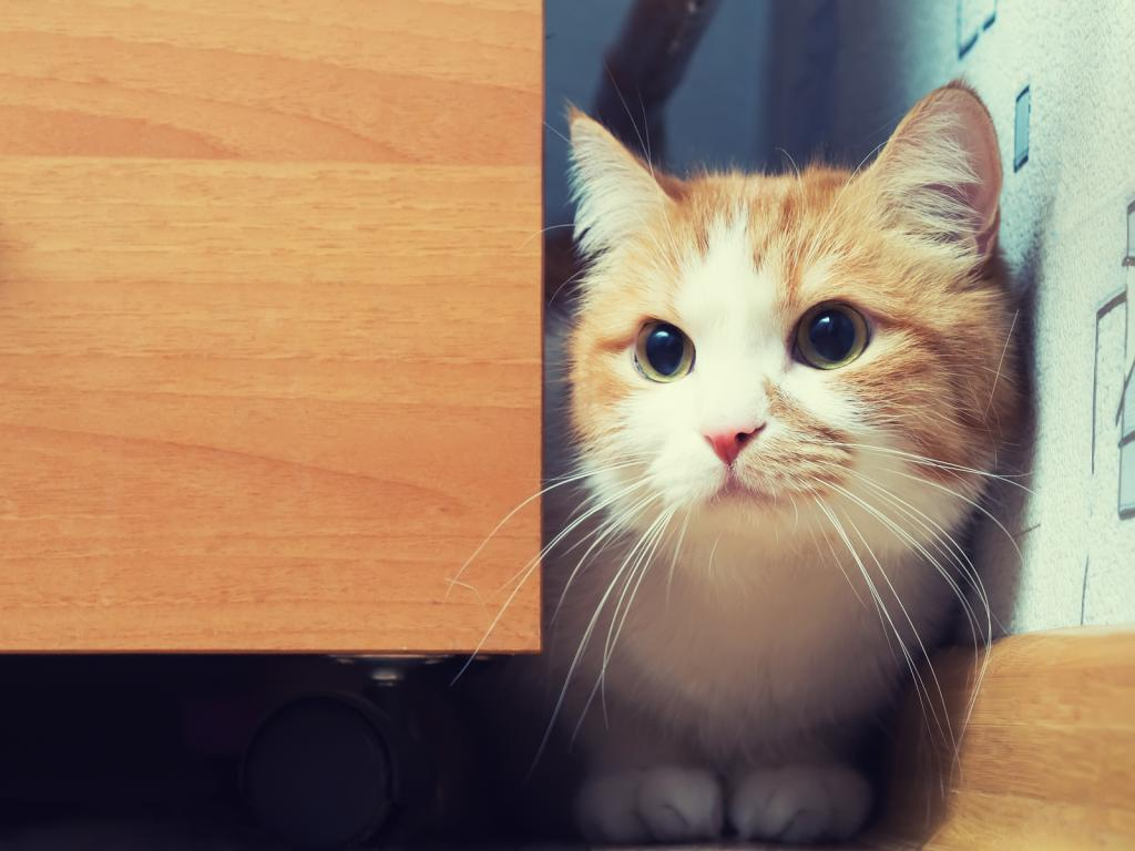 почему котенок не ходит в лоток