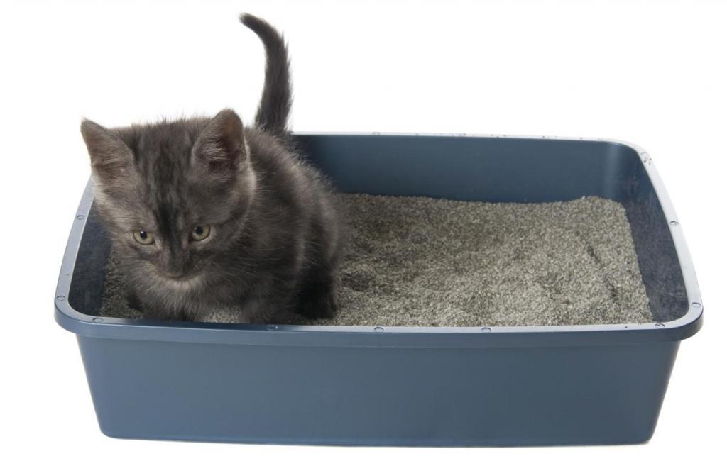 как котят приучить к лотку в месяц