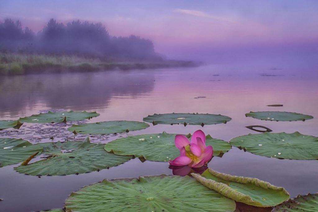 Озеро Лотосов.