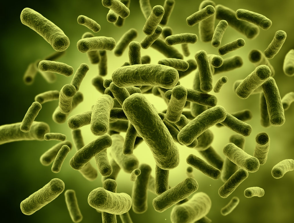 может фото бактерий человека на теле было заложено две