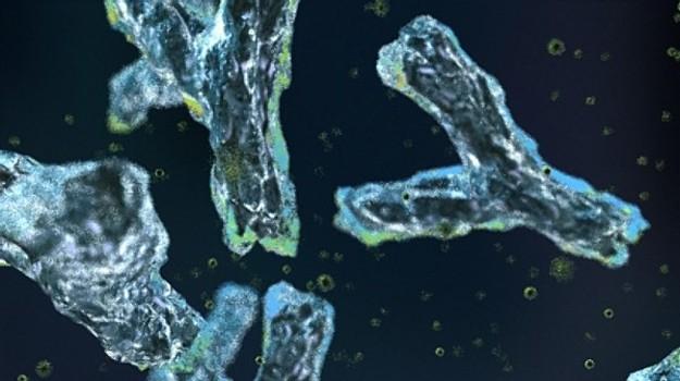 Агрессивные антитела