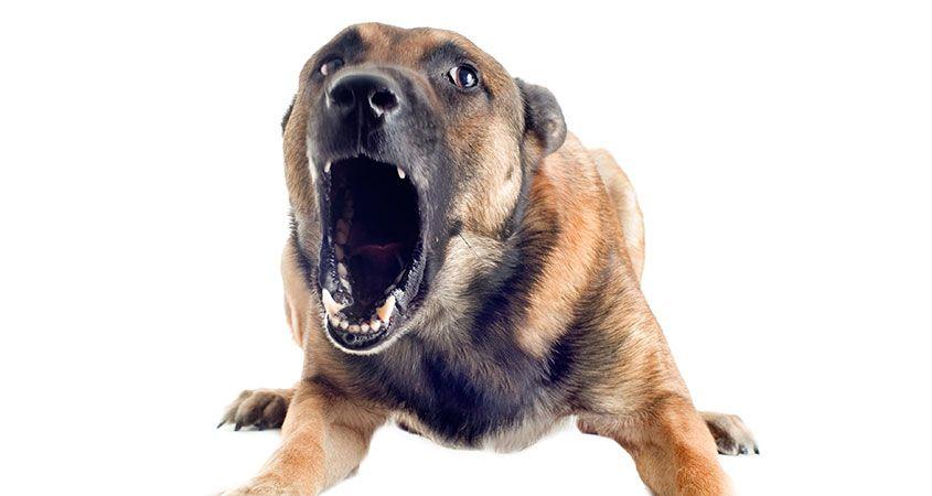 Злой пес