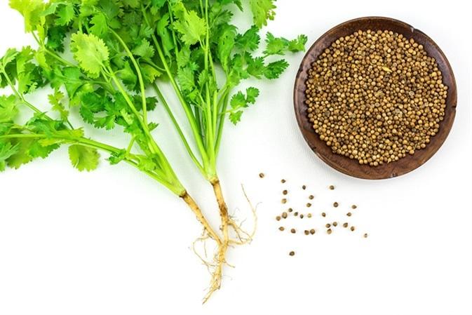Кинза зелень и семена