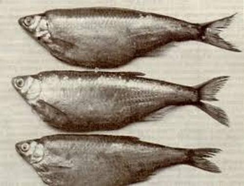 уродства рыб Москва-реки