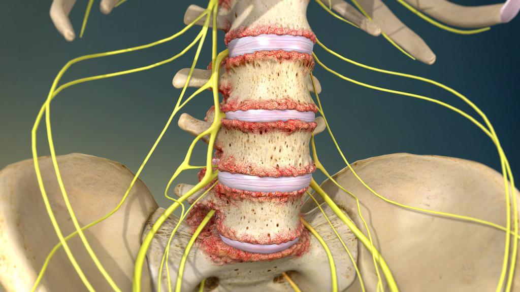 опасность ушибов спины