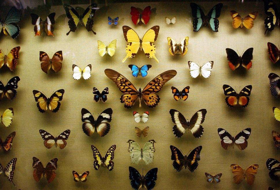 wall of butterflies