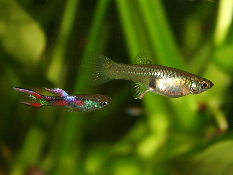 Поза рыбы в йоге фото
