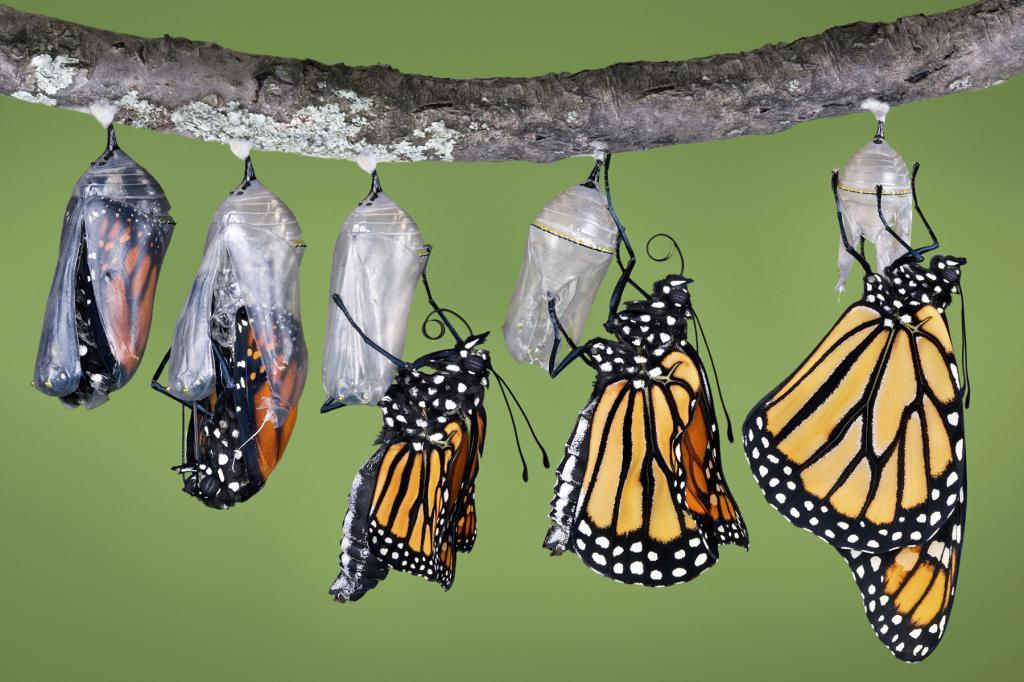 Картинки бабочка из кокона