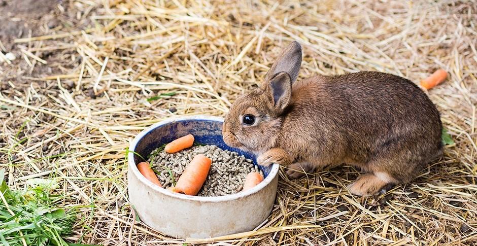 Кролики бройлерных пород: обзор, описание, характеристики