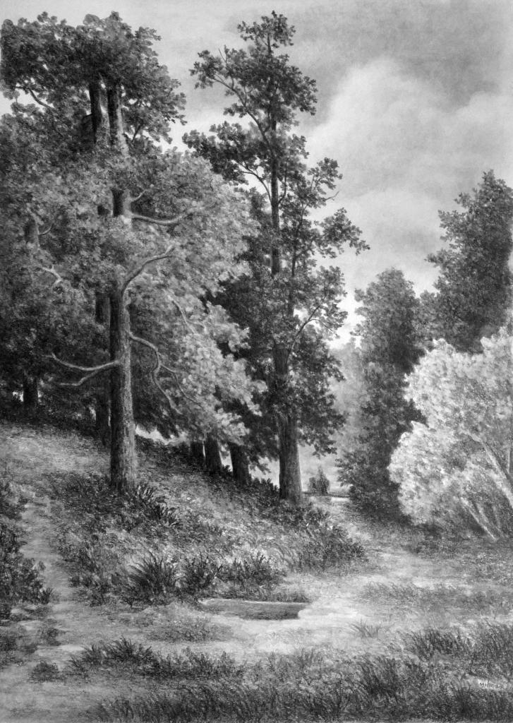 картинки лесной пейзаж рисунок можно встретить оформлении