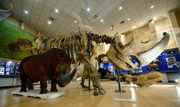 Музей мамонта: список, адреса, экспонаты, интересные экскурсии, необычные факты, описание с фото, отзывы и советы туристов