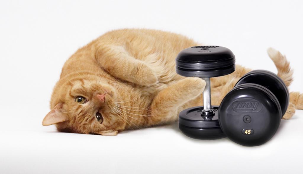 Как Быстро Сбросить Вес Коту. Как заставить похудеть толстую кошку?