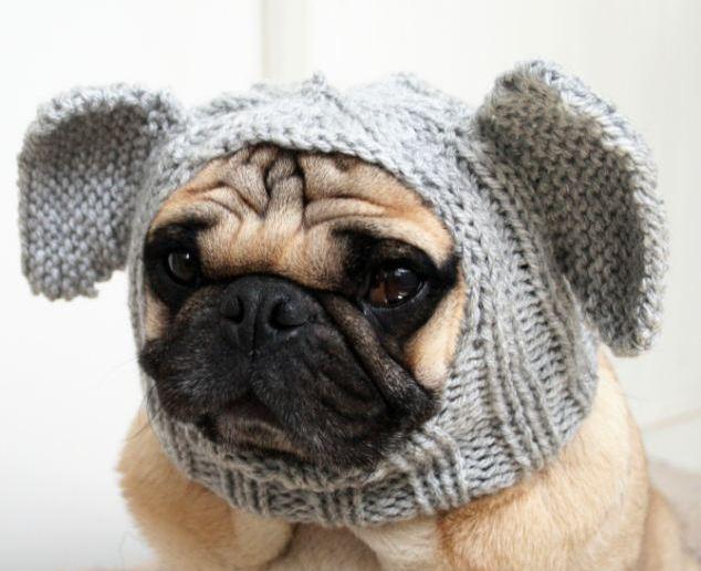 Как связать шапку для собаки спицами: описание, фото