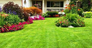 Декоративные цветущие кустарники
