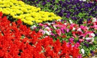 Бордюрные многолетние цветы виды и