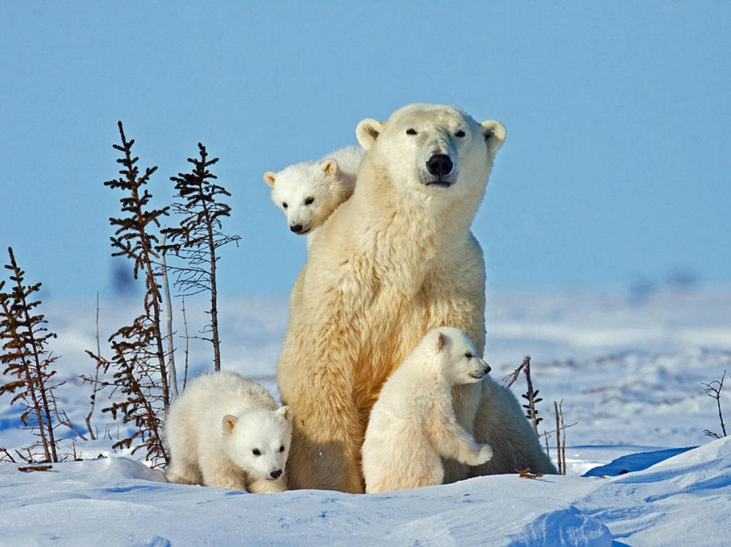 Mommy with kids