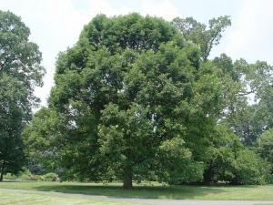 деревья под знаком зодиака