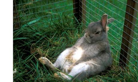 Кормление разведение кроликов
