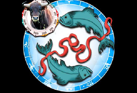Fish born in the year of the bull