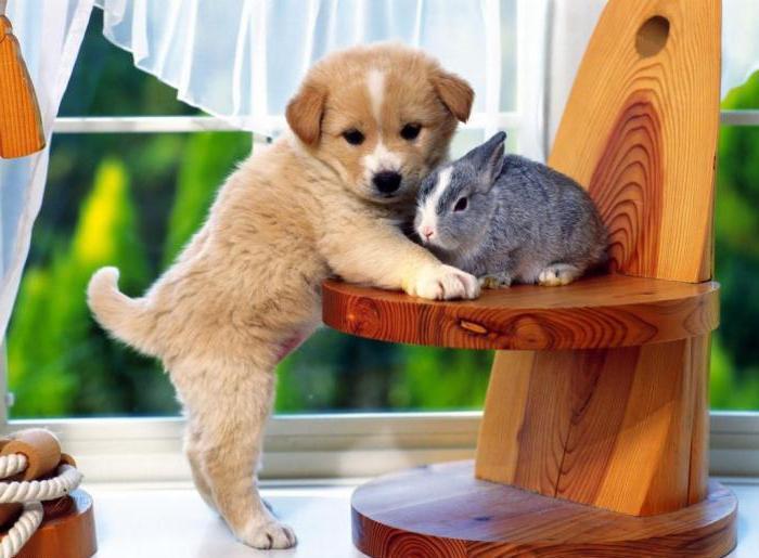 вакцина от бешенства для собак инструкция