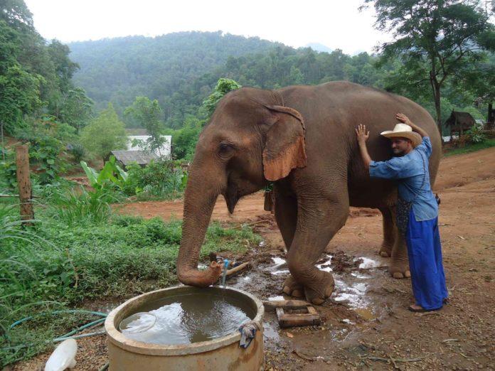 Оргазм слонов