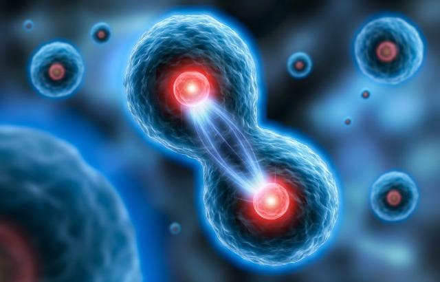 Эндометрий поздней стадии фазы пролиферации 15