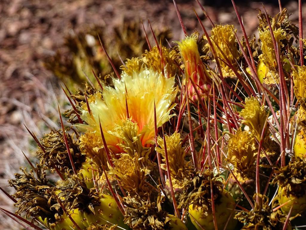 Топ-5 необычных колючих цветков и растений