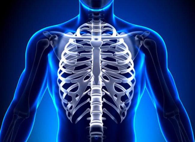 перелом ребра сколько заживает