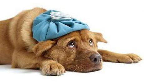 тепловой удар у собаки что делать