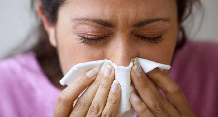 как определить аллергию на хомяка